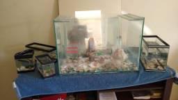 Aquario 80 litros