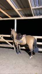 Cavalo Gateado