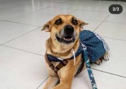 Pérola - Cachorrinha P/ Adoção Responsável, +/- 5 anos, Castrada e Vacinada