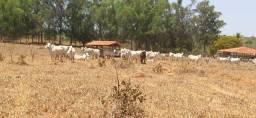 Fazendinhas de 20.000 m² com Excelente Terra para Cultivo   Financio