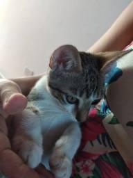 Doa-se filhote de gato