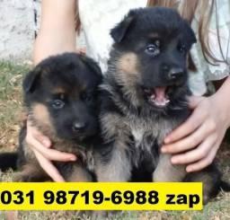 Canil Filhotes Cães Alto Padrão BH Pastor Dálmatas Boxer Rottweiler Labrador Golden