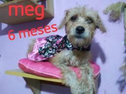 Meg doação responsavel