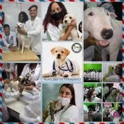 Curso de Auxiliar de Veterinário + Atendimento Em Pet Shop