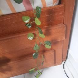 Folhas de hera artifical 2 metros