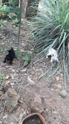 Doação de gatinhos filhotes