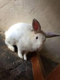 Doação de coelho