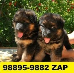 Canil Maravilhosos Filhotes Cães BH Pastor Akita Boxer Labrador Golden