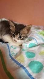 Gatinhos vermifugados para adoção