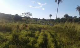 Fazenda 122 alqueires, cultura