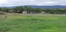 Fazenda no município Rafael Jambeiro a 96 km de Feira de Santana