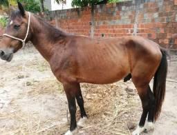 Vendo cavalo é arriata ?