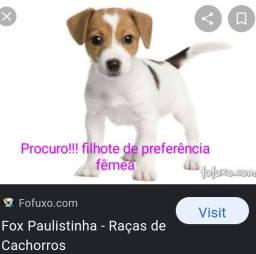Procuro, raça fox