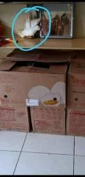 Distribuidora + ovos