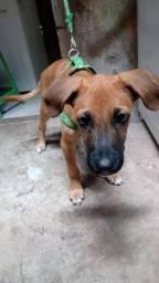Doando cachorro com 3 meses