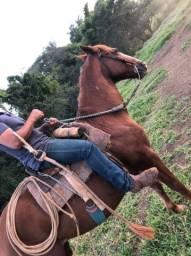 Cavalo marchador MÁQUINA