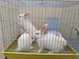Filhote de coelho  por R$ 30,00 cada