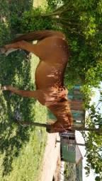 Vendo 2 cavalos enciado