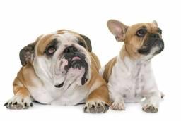 V/T casal jovem dr bulldog inglês