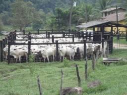 Fazenda de 30 alqueires em Silva Jardim, RJ