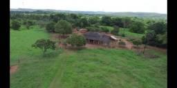Fazenda de pecuária a venda 12 km porto nacional