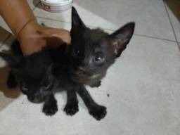 Doa se 3 gatinhos pretos 2 macho e uma fêmea
