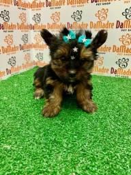 No Da Madre Pet Shop você encontra filhotes de Yorkshire, parcelamos!!