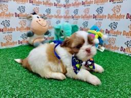 No Da Madre Pet Shop você encontra filhotes de Shih Tzu!!