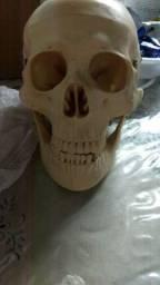 Crânio anatomia