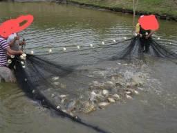 Rede de pesca para criatorio de peixes.