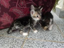 Doacao gatinhos
