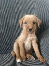Vendo essa linda cachorrinha filhote pinscher
