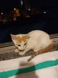 Doação de gato filhote ( fêmea)