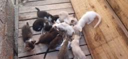 Gatos para adoção responsável.