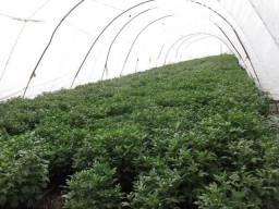Decoraçao paisagismo terra preta preparada plantaçao quintal rosa