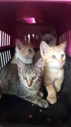 Gatos filhotes castração garantida