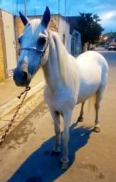 Égua piquira 1,56m Altura