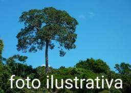 Fazenda com 262.000 hectares no Amazonas, ler descriao do anuncio