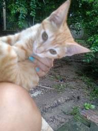 Doação responsável gatinhos