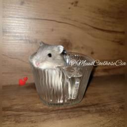 Filhote Hamster Anão - Poços de Caldas