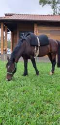 Dois cavalos Top
