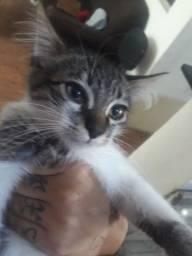 doando gatinha urgente