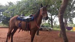 Égua domanda R$ 1.500,00