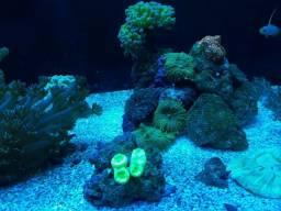 Corais aquario marinho