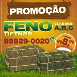 FENO TIFTN85