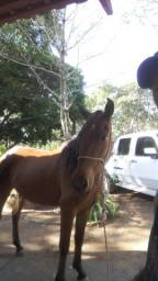 Cavalo com arreio
