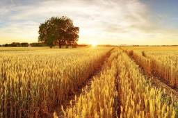Título do anúncio:  {FR} Crédito Rural