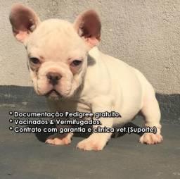 Bulldog frances macho
