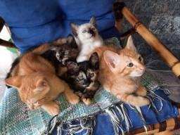 Doações de bebês gatos