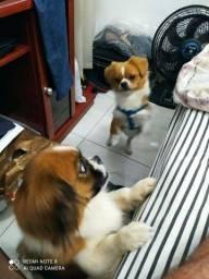 Cachorro piquines